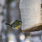 Jak zrobić karmnik dla ptaków z butelki plastikowej